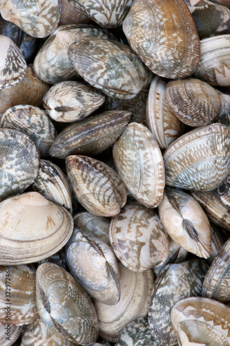 Oyster shell background