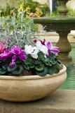 cyclamen hrnec a fontána v zahradní místnosti