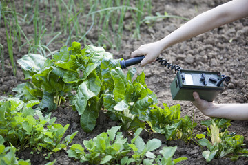 measuring radiation levels of vegetables