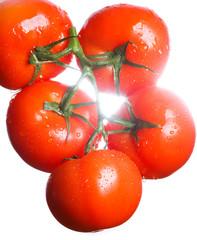 Гроздь томатов в контровом свете изолированно на белом фоне