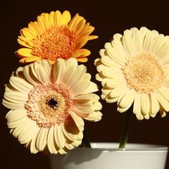 three gerberas in vase
