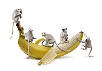 Paviane beim Banane Essen