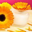 Ringelblumen - Kosmetik - Salbe