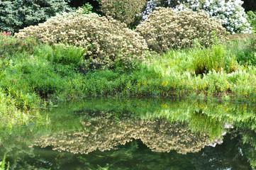 Frühling im Garten. Spiegelung im Teich