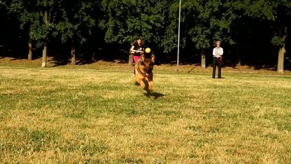 pastore tedesco al parco