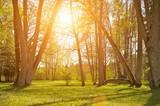 Fototapeta na zewnątrz - park - Drzewo