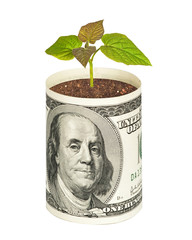 Tree growing from dollar bill