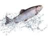 Fische 128