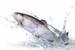 Fische 137