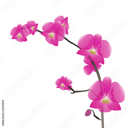 a branch of pink orchids, isolation