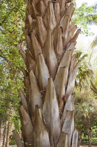 Trunk of a palm tree closeup