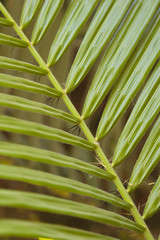 Closeup of plant leaves in a garden