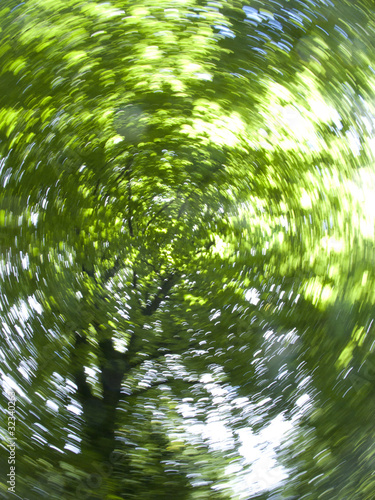 Sun shining though green tree branches as they are spinning