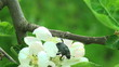 doug beetle scarab close up