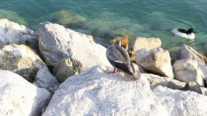 Aves junto al lago