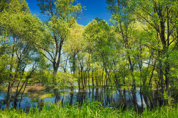 Wallpaper of trees in the swamp near Narew river, Poland