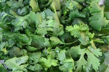 Cilantro leaves