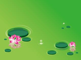 Lotus flowers(waterlily)