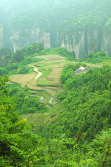 The garden at sky landscape of Zhangjiajie