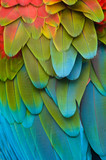 Fototapety Colorful Macaw Plumage