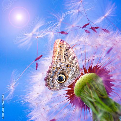 Pusteblume mit Schmetterling - 32370828