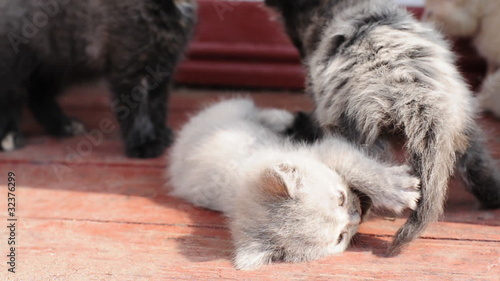 kittens playing outdoor