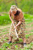 Old rural woman working the land