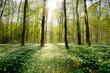 Leinwanddruck Bild - Waldlichtung im Gegenlicht