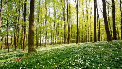 Waldlichtung im Frühling