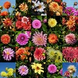 colourful arrangement of flowers