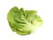 Salat Salatblatt Kopfsalat