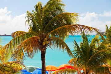 Palm Trees and Beach Umbrellas on St. Maarten, Caribbean