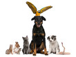 Portrait of group of pets in front of white background