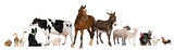 Fototapety Variety of farm animals in front of white background