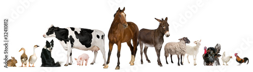 Variety of farm animals in front of white background - 32410812