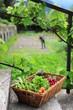 Bio jardin