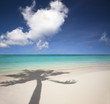 beautiful white sand beach and palm tree shadow