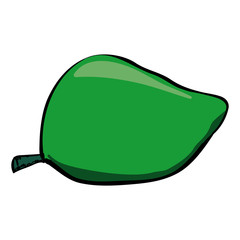 Vector sketch drawing of a green mango