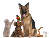 Fototapety Group of animals in front of white background