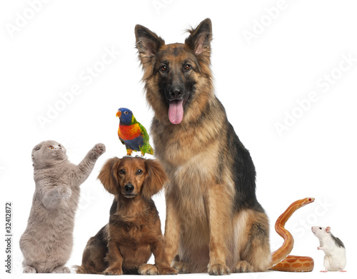 Poster Group of animals in front of white background