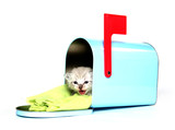 Cute kitten sitting in mailbox