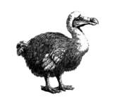 Dodo Dodo
