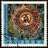 Passion flower on post stamp