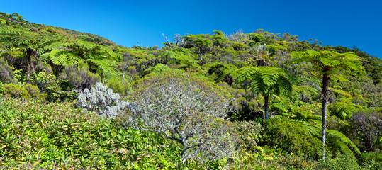 Forêt tropicale de fougères arborescentes - Ile de La Réunion