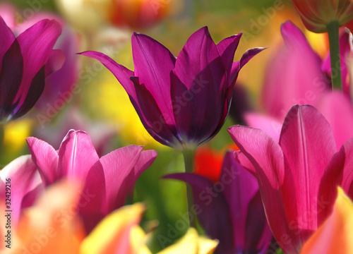 Fototapety, obrazy : Spring beauty
