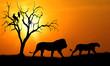 canvas print picture - lion silhouette