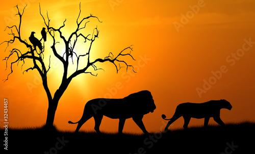 canvas print picture lion silhouette