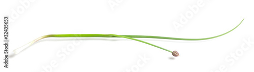 Spring onion isolated on white background