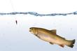 Fische 143