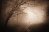 Fototapeta belka - piękny - Dziki pejzaż